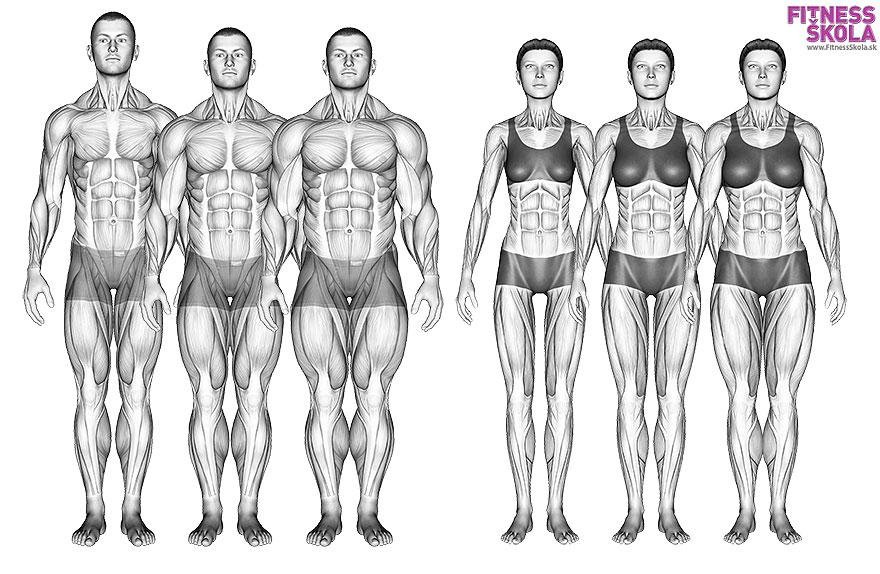 somatotpy fitnessskola